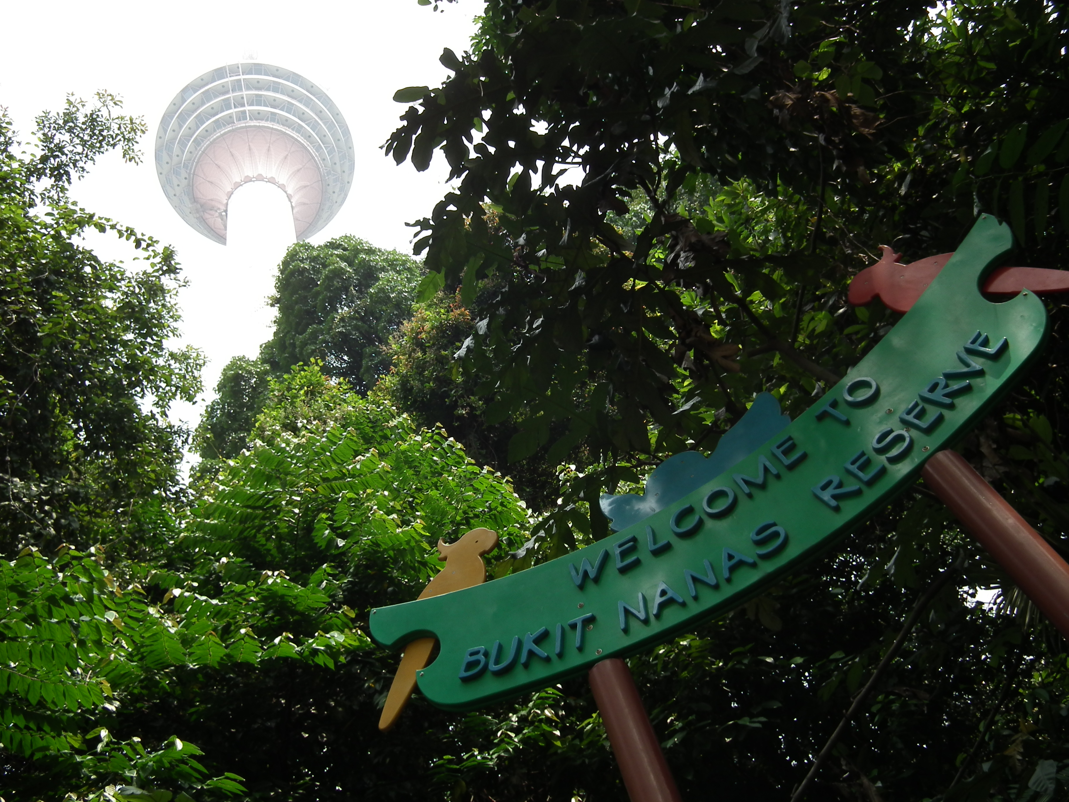 bukit-nanas-forest-reserve-1