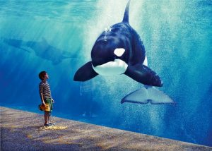 florida-sea-world-orlandovocation-com